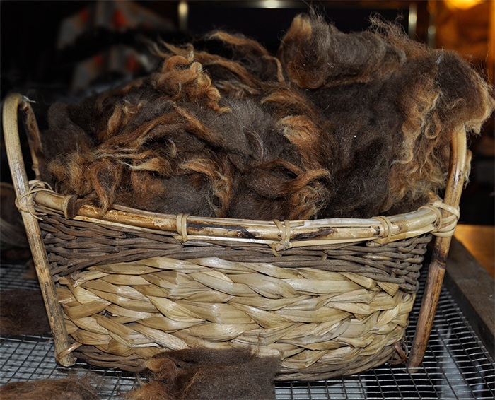 Basket of raw Navajo-Churro wool at Dot Ranch.
