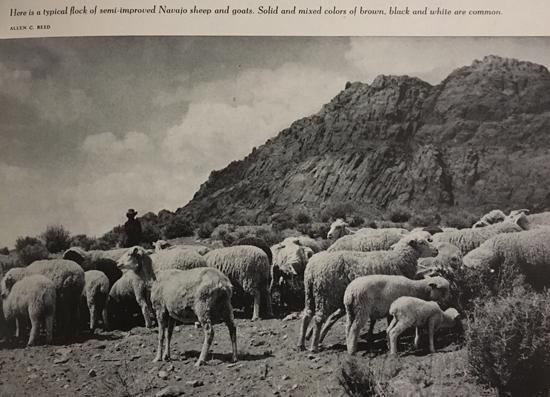 Image from Arizona Highways August 1950