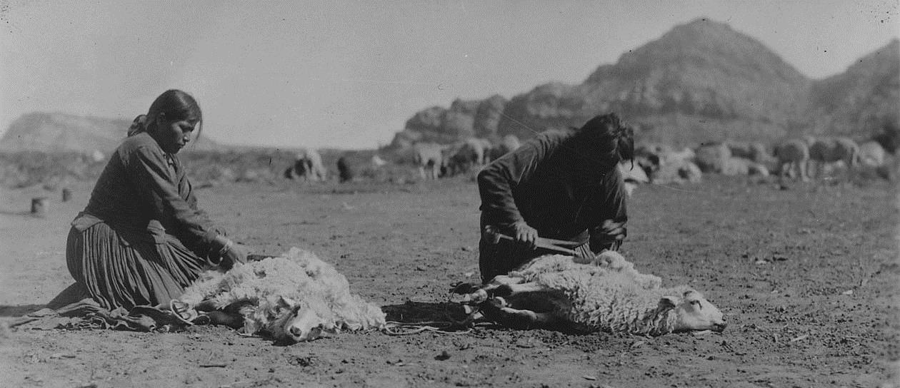 Navajo women shearing sheep.